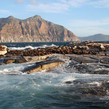 duiker-island-2076042_640